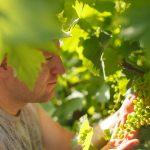 Visite des vignes de champagne des hauts-de-france